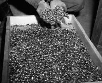 V Poľsku našli zlatý nacistický poklad