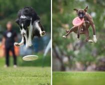 Vedia psy lietať? Pozri si tieto skvelé momentky!