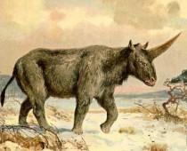"""Vyhynutého """"Sibírskeho jednorožca""""  mohli stretnúť aj ľudia"""
