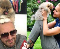 RYTMUS sa teší z nového domáceho miláčika. Pitbull to teda rozhodne nie je!
