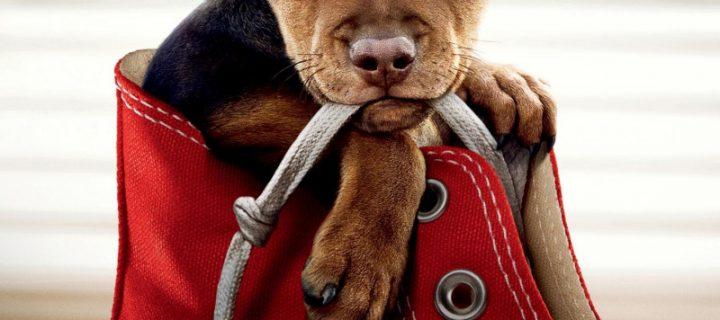 Milovníci psíkov pozor! Nový film od autora filmu Psia Duša