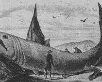 Prehistorická príšera spod hladiny! Globster alias Stronsayské monštrum