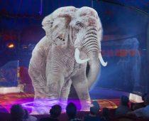 Nemecký cirkus udivuje celý svet: Holografická show namiesto živých zvierat