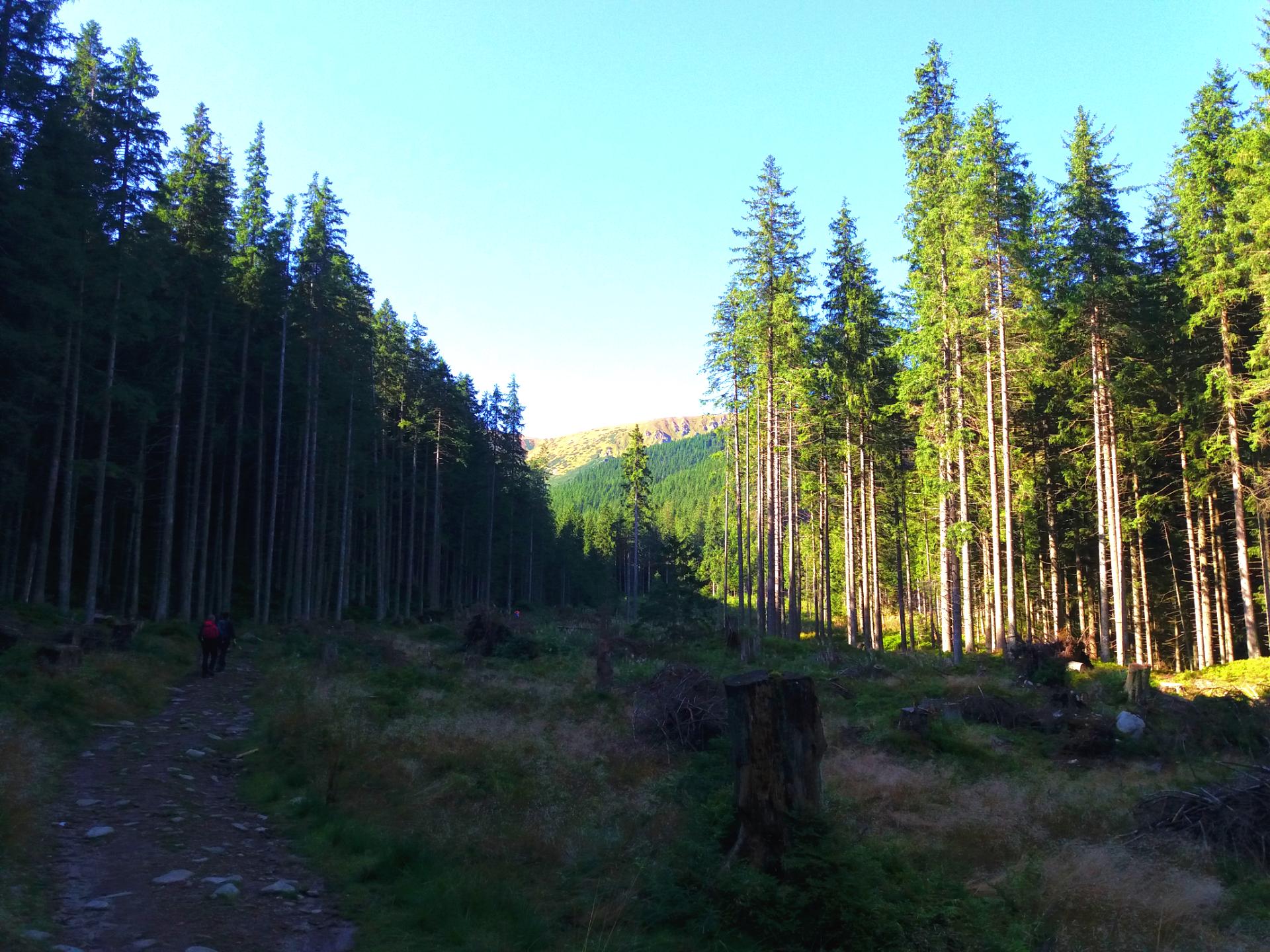 Začiatok trasy po čltom chodníku smerom na Chopok.