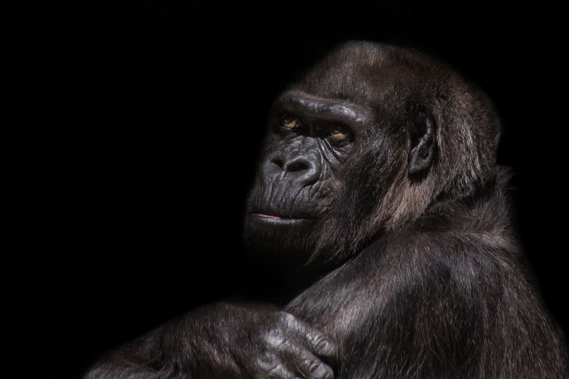 znaky vysokej inteligencie majú aj primáty