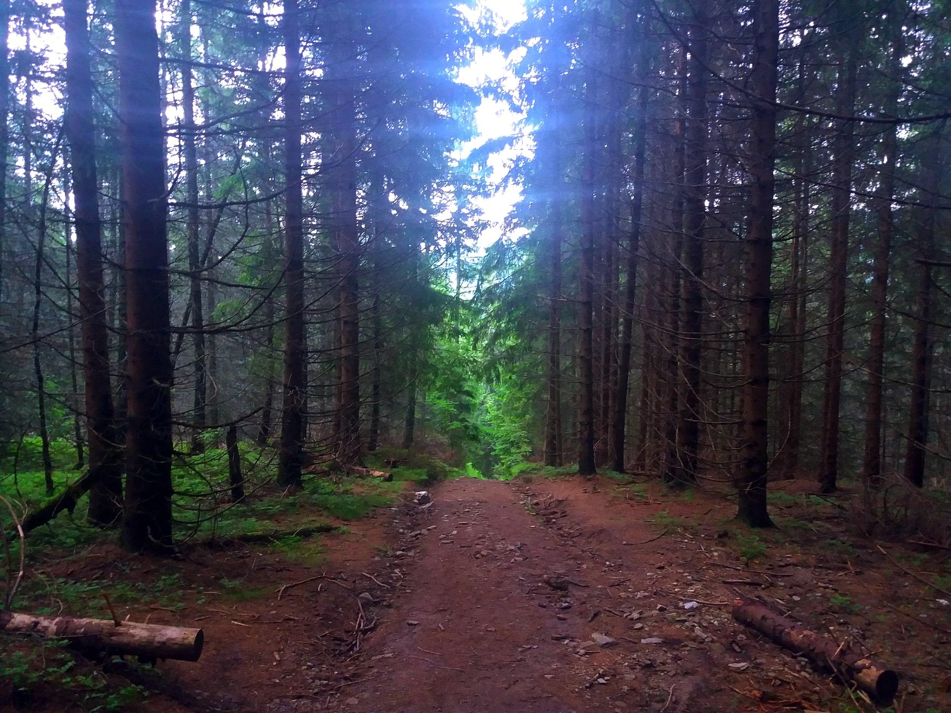 Les, Kráľova hoľa